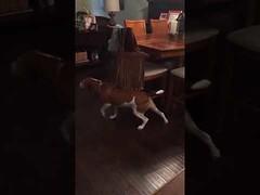 Dog loves ticklish fringe (Download Youtube Videos Online) Tags: dog loves ticklish fringe