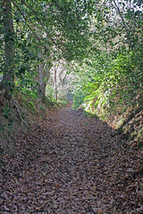 Ightham Mote's circular walk to Oldbury Hill (Adam Swaine) Tags: woodland leaves paths walks autumn nationaltrust ightham ighthammote trees kent swaine ukcounties uk seasons canon kentweald