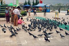 Feeding the birds (*Kicki*) Tags: market temple myanmar burma inlelake people family children doves birds feeding inle inlaylake inlay shanstate tarlay 50mm columbidae pigeons longyi