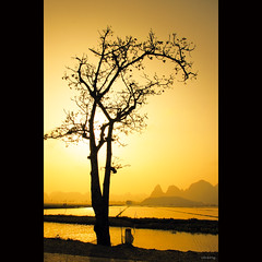 Solitude at golden sunset (-clicking-) Tags: trees sunset sun sunlight mountain sunshine silhouette yellow skyscape landscape one solitude alone branch atmosphere vietnam lonely ricefield goldensunset goldenhour honghn vietnameselandscape