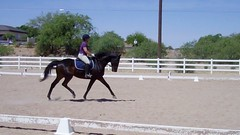 horse riding, improve your riding, thistle Ridge Skill Builders, Laura Kelland-May, horse riding, horse training Ottawa, Horse training Ontario, hunter Jumper, Hunter Judge, hunter judge Canada, hunter jumper