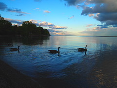 Geese (creditflats) Tags: blue sunset sky lake ontario canada bird water clouds evening geese day shore lakeontario mississauga portcredit cranberrycove pwpartlycloudy