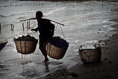 Algae Culture - Koh Tonsay - Rabbit Island - (jpereira_net) Tags: ocean mar asia cambodia algae algas cultivo camboya