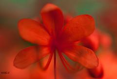 Short Walk in the Garden (Hamid.A) Tags: flower color macro closeup garden close allangarden