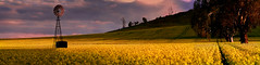 Windmill in Canola 2 (Explored) (Andrew Fleming Photography) Tags: trees light sunset storm windmill landscape australia andrew victoria hills explore dookie canola fleming andrewfleming goulburnvalley centralvictoria greatershepparton mygearandme mygearandmepremium mygearandmebronze