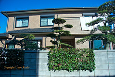Out and about in Hiratsuka City, Kanagawa Japan (James Kemlo (Junpei Hayakawa)) Tags: houses japan wall rural garden suburbia hedge farms kanagawa jameskemlo junpeihayakawa