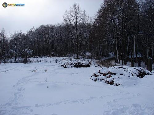 CZ-Platania-Nevicata sul Reventino 19_L