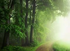 IfInDoubt...StraightIntoTheFog! (BphotoR) Tags: fog forest germany deutschland spring woods hessen camino may mai wald springtime weg frhling waldweg odenwald bergstrasse juhhe forestofodes canonpowershotg10 weschnitztal bphotor