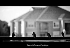 Love is a game that two can play and both win. (Premkumar_Sparkcrews) Tags: life inspiration game bird love monochrome birds animal 50mm fly dallas high nikon focus texas dof pov path quotes sparrow lie seperation pof kuruvi chittukuruvi nikond3100 sparkcrewsstudios premkumarsparkcrews sparkcrewscom premkumarsachidanandam