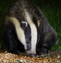 please stop the cull... (explored) (Dawn Porter) Tags: