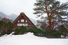 Shirakawa Historical Houses in winter () Tags:  shirakawa