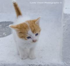 Greek Kitten - Mykonos Town (CastleVision) Tags: cute cat lost kitten sad mum mykonos forlorn
