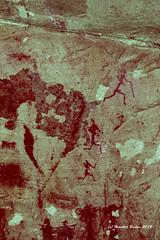 cederhills_rock_paintings 36 (HerryB) Tags: africa heritage southafrica san western cape afrika sar rockart khoi weltkulturerbe afrique bushmen suedafrika rockpaintings heribert schamanismus kulturerbe paintures artefakt schamane peinturesrupestres sanpaintings cederberge bechen sdafrka dstretch jonharman felsmalereien buschmnner shamanisme montcederlodge jonharmann rupestere painturesrupestres cederhills mountcederlodge