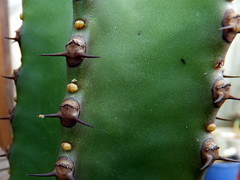 090 (_Biess) Tags: cactus euphorbia gasteria astrophytum frailea