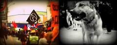 (Felipe Smides) Tags: chile riot protesta riots marcha valdivia fotografía protestas smides felipesmides