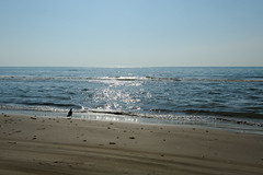 DS7_7716.jpg (d3_plus) Tags: street sea sky beach nature japan walking spring scenery bokeh outdoor fine wideangle daily  streetphoto gw      dailyphoto kanazawa  thesedays ishikawa superwideangle    fineday    tamron1735   a05   tamronspaf1735mmf284dildasphericalif  tamronspaf1735mmf284dildaspherical d700    nikond700 tamronspaf1735mmf284dild  chirihamanagisadriveway tamronspaf1735mmf284  nikonfxshowcase