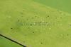SMS_20150507_0527.jpg (Luchtfotografie SiebeSwart.nl Aerial Photography) Tags: blackandwhite holland nature netherlands grass landscape cow weide cows nederland meadow aerialview aerial pasture aerialphoto pastures gras vee wei grassland birdseyeview ijssel luchtfoto weiland landschap koe koeien vogelperspectief vogelvluchtperspectief grasland melkvee zwartbont dairyfarming kampereiland catttle milchcow dairycattle veeteelt luchtopname melkkoe friesiancows melkveehouderij melkkoeien gelderseijssel agrolandentuinbouw agroveeteelt stockcattlebreeding blackpatched michcows versgras namengeografischalgemeen namengeografischkanaalrivierzee
