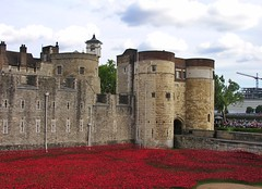 Poppies at the Byward Tower (jere7my) Tags: greatbritain vacation england london castle history memorial unitedkingdom wwi treasury historic belltower prison worldwari poppies soldiers moat fortress englishhistory arrowslits toweroflondon veterans artinstallation 1066 casualties commemoration 2014 centenary royalmint wardead thetoweroflondon crenelations tompiper bywardtower hermajestysroyalpalaceandfortress paulcummins towerpoppies bloodsweptlandsandseasofred 888246 ceramicpoppies