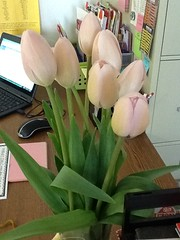 "Christie's Mother's Day Flowers from Her 2nd Grade Class at Bristol Bay • <a style=""font-size:0.8em;"" href=""http://www.flickr.com/photos/109120354@N07/17830560652/"" target=""_blank"">View on Flickr</a>"