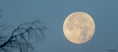 The Morning After (Summerside90) Tags: supermoon nov142016 tamron themorningafter ontario canada