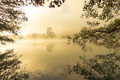 DSC04921_s (AndiP66) Tags: bannwil bern schweiz ch berken aare fog nebel autumn herbst light licht morning morgen river fluss water wasser reflections spiegelungen kantonbern cantonberne oberaargau switzerland sony sonyalpha 77markii 77ii 77m2 a77ii alpha ilca77m2 slta77ii 1116mm tokina superwideangle tokinaaf1116mmf28 f28 atx116prodx andreaspeters mist