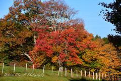 Bright Autumn Morning (Dianne Sherrill Photography) Tags: autumn trees blueridgeparkway fallcolor scenic landscape morning mountains