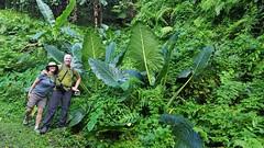 Unique vegetation on Tutuila, American Samoa