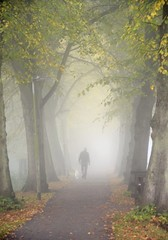 foggy day (daaynos) Tags: fog foggy mist trees autumn fall man dog silhouette
