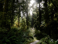 Sun on Trail (Ramona H) Tags: light sun trail forest trees hiking outdoors northcascades fall autumn