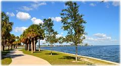 DSNorthshore Park - St Petersburg, FloridaC_9828 (lagergrenjan) Tags: northshore park st petersburg florida tampa bay