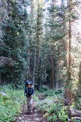 Hiking Through the Trees of Granite Canyon (GlobalGoebel) Tags: canon powershot g9x granite canyon trees grand teton national park wyoming backcountry tetoncresttrail