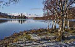 Birches at the shore (judmac1) Tags: loch frost winter birches trees reflection highlands scotland invernessshire mountains island blue calm peaceful