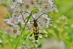 bug (Hugo von Schreck) Tags: hugovonschreck macro makro insekt insect outdoor canoneos5dsr tamron28300mmf3563divcpzda010