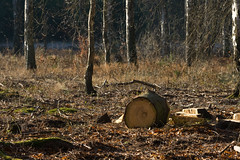 ckuchem-7204 (christine_kuchem) Tags: wald abholzung baum baumstmme bume einschlag fichten holzeinschlag holzwirtschaft waldwirtschaft