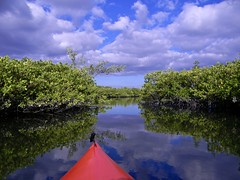 Mangrove Creek (bob in swamp) Tags: kayak kayaking paddling munyonisland johndmacarthurbeachstatepark palmbeachcounty florida northpalmbeach nikon coolpix mangrove creek trail estuary lakeworthlagoon trees reflection