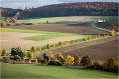 Autumn Lights . (:: Blende 22 ::) Tags: germany deutschland thuringia thringen herbst autumn leaves bltter bunt color canon canoneos5dmarkiv light shadow green field leave sun beams trees bume ef70200mmf4lisusm