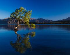 That Wanaka Tree (TheDailyNathan) Tags: fallcolors lake lakewanaka lonetree newzealand nz otago reflection thatwanakatree tree wanaka willow