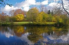 NOVEMBRE JAUNE. (jmsatto) Tags: novembre jaune automne parc lesulis arbres nuages reflets essonne