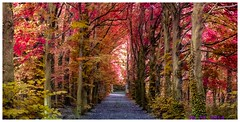 beautiful trees (aminekaytoni) Tags: trees bos bossen nature herfst autumn verdure automne sony wx300 artistic magic artistique magique street photography