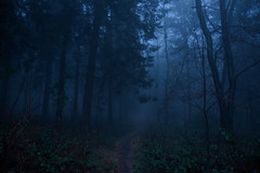 keep the streets empty (Glupschmops (back soon)) Tags: outdoor wald wood forest trees tree baum morning early fog nebel stille ruhe sombre nature landscape moody autumn herbst