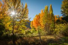 La explosión del color (Giacomo della Sera) Tags: paisaje landscape photography fotografia amarillo yellow otoño autumn naranja orange sky cielo nature natutaleza bosque forest luz light españa spain arbol