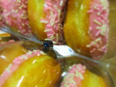mmmmm Doughnuts, let me in! (JulieK (finally moved to Wexford)) Tags: fly diptera hfdf doughnut cake food tesco canonixus170 insect fauna hbbbt waterford 2016onephotoeachday