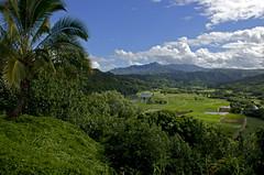 Hanalei Valley (Greg Francis) Tags: hanalei valley hanaleivalley kauai hawaii