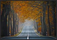Herbst in der Allee (NPPhotographie) Tags: nature art creative oberberg npp tree wood forest allee street autumn fall leaf magic mritz serrahn