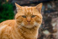 cat (Alirza Aslan) Tags: cat kedi gatos animals pentax pentaxk10d k10d cute