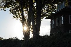 (Linda Petrich) Tags: sunlight star tree setting sun starlight