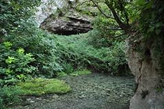Dal grand canyon, alla foresta amazzonica (Starlightworld) Tags: vegetazione fiume pantalica sicilia italy sicily starlightwold