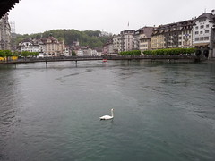 Swan on River Reuss (U A Satish) Tags: riverreuss lucerne switzerland outdoor swan water buildings uasatish river