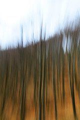 forest motion - 01 (Elido Turco - Gigi) Tags: movimento bosco friuli esperimento faggeta elidoturco forestmotion