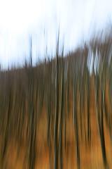 forest motion - 01 (Elido Turco - Gigi) Tags: movimento bosco friuli esperimento faggeta elidoturco forestmotion